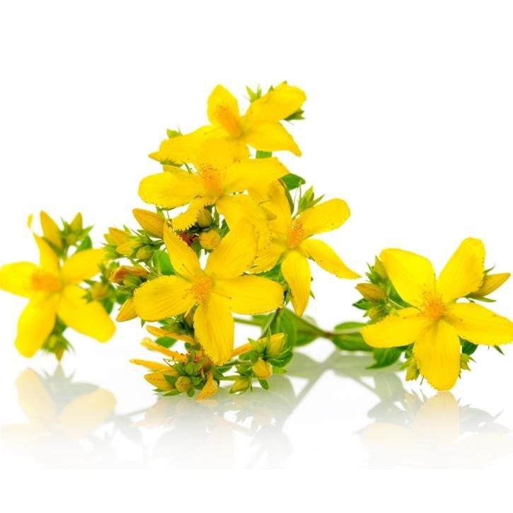 "Резултат с изображение за ""Hypericum Perforatum Flower Extract"""