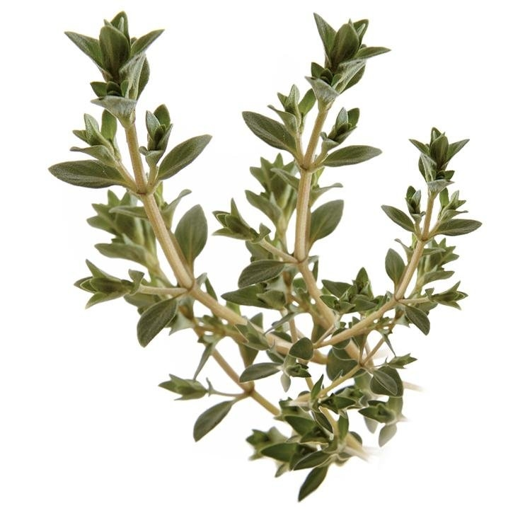 plantas-web-ok-GAYUBA.jpg